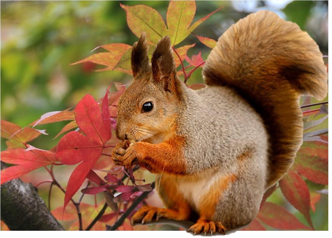BuzzAutumnSquirrel.jpg